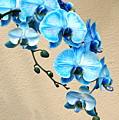 Blue Mystique Orchid by Byron Varvarigos
