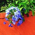 Blue On Red by Caroline  Urbania Naeem