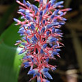 Blue Red Plant by Rob Hans