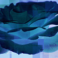 Blue Rose by Donna Bentley