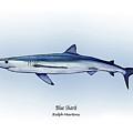 Blue Shark  by Ralph Martens