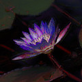 Blue Waterlily by Donna Bentley