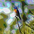 Bluebird by Ben Upham III