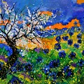 Bluecornflowers 451120 by Pol Ledent