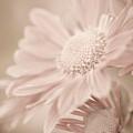 Blushing by Julie Palencia