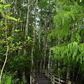 Boardwalk Through The Bald Cypress Strand by Barbara Bowen
