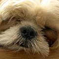 Bogie Asleep by Kathi Shotwell