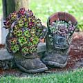 Boots by Liz Santie