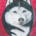 Boris The Siberian Husky by Ania M Milo
