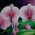 Borneo Orchid  by Edoen Kang