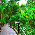 Botanic Gardens Trail by James O Thompson