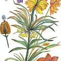 Botanical Flower-53  Yellow Flower by Julie Richman