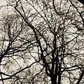 Branches Intertwined by Robin Lynne Schwind