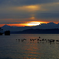 Brants At Sunset by Karen Ulvestad