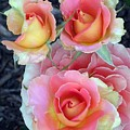Brass Band Roses by Living Color Photography Lorraine Lynch
