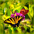 Bright Butterflies by Tina Meador