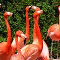 Bright Flamingos by Maria Bonnier-Perez