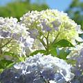 Bright Floral Art Pastel Blue Purple Hydrangeas Flowers Baslee Troutman by Baslee Troutman