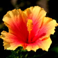 Bright Hibiscus by Diane Merkle