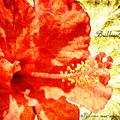 Brilliant Hibiscus by Teresa Mucha