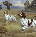 Brittany Spaniels Flush Three Birds by Walter A. Weber