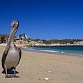 Brown Pelican At The Baja by John Harmon