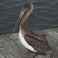 Brown Pelican On Pier 2 by Wendell Baggett