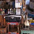 Brown Pelican Visiting Mexican Beach Bar by John Harmon