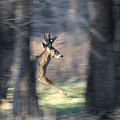 Buck Running Thru The Woods by Ernie Echols