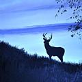 Buck Silhouette In Blue by Penny Neimiller