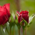 Bud Bloom Blossom by Mike Reid