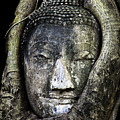 Buddha Head In Banyan Tree by Adrian Evans