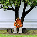 Buddhist Monk Sits Under Tree by Ray Laskowitz - Printscapes