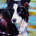 Buddy Border Collie by Kelly McNeil