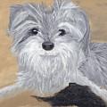 Buddy by Debbie Levene