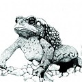Bufo Americanus by Preston Shupp