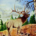 Bugling Elk by Jimmy Smith