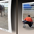 Bull Challenge - Gently Cross Your Eyes And Focus On The Middle Image by Brian Wallace