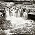 Bull Creek Water Run by Lisa  Spencer