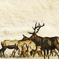 Bull Elk  by Karen  W Meyer