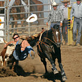 Bulldogging At The Rodeo by Christine Till