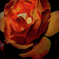 Burning Ember Rose by DigiArt Diaries by Vicky B Fuller