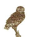Burrowing Owl On Mullein by Dawn Senior-Trask