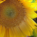 Burst Of Sunshine by Terry Anderson