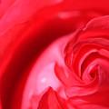 Butler Rose by Michael McGowan