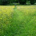 Buttercup Meadow by Maria Joy