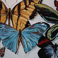 Butterflies by Diann Baggett
