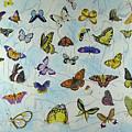 Butterflies by Ying Wong