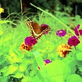 Butterfly At Work by Jill Tennison