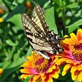 Butterfly Beauty by Dion Baker